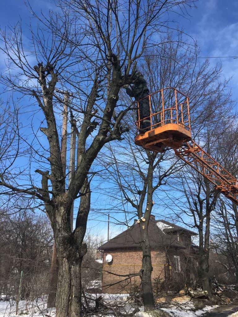 Як можна заробити на обрізці дерев з Gardener
